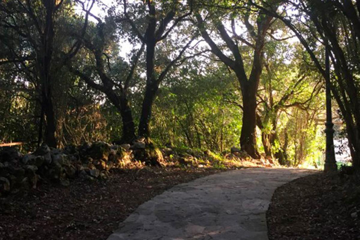 Imagen de camino entre árboles en Villaescusa