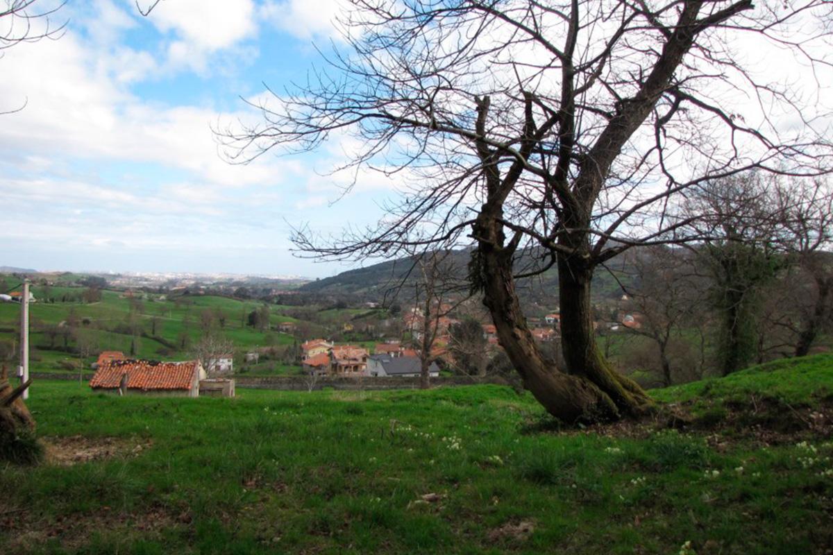 Imagen paisaje de árboles en Villaescusa