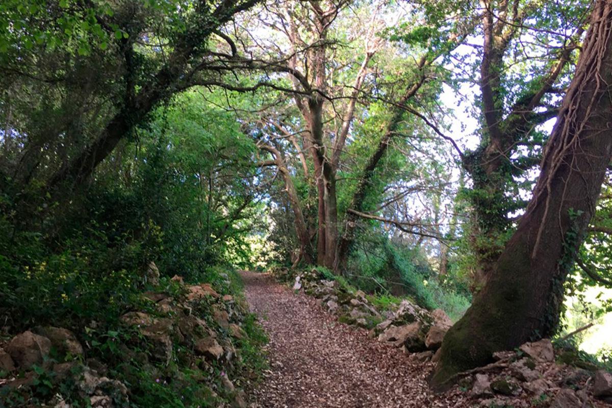 Imagen sendero entre árboles