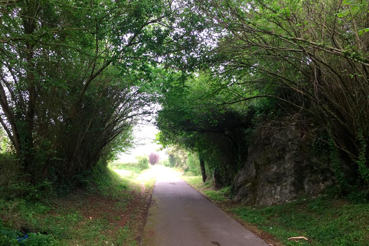 Imagen camino entre árboles
