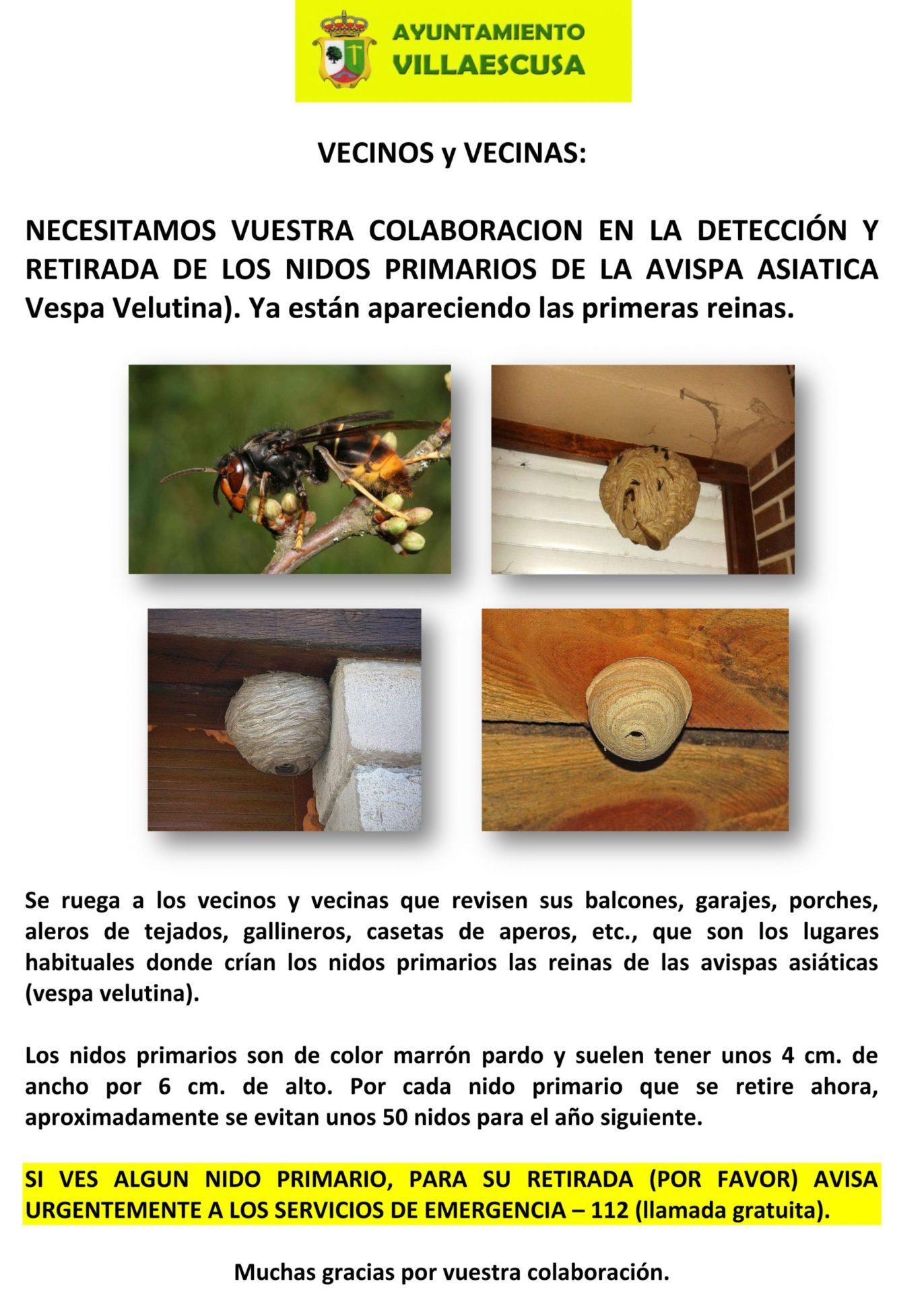 Cartel retirada de nidos de avispa